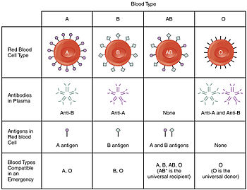 1913 ABO Blood Groups.jpg