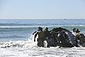 1st MSOB Canine Handler Surf Passage and Zodiac insert training 160209-M-AX605-179.jpg