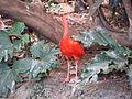2008-05-25 Pittsburgh 072 Aviary (2669718708).jpg