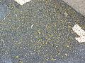 2008 05 29 - Bowie - MD564 over CSX - Ground pavement marking 1.JPG