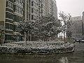 2011年郑州的第一场雪 - panoramio.jpg