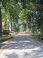 2014-09-17 14.22.31 Allée de hètre vers le château de Bolinne-Harlue.jpg