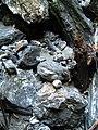 2015 Liechtensteinklamm Gesteine 2.JPG