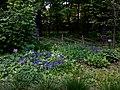 2019-05-14 - Аптекарский огород - Фото 7.jpg