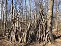 2021-03-11 14 02 00 A makeshift fort made out of logs in a forested areas within the Franklin Farm section of Oak Hill, Fairfax County, Virginia.jpg