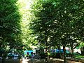 3-ga-waltermöllerparkcafé-2014-07.jpg