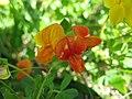 3750 - Zermatt - Flowers.JPG