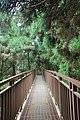 558, Taiwan, 南投縣鹿谷鄉內湖村 - panoramio (21).jpg