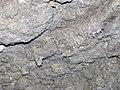 58 Gypsum speleothem, ceiling of Collins Ave. 1 (8324769347).jpg