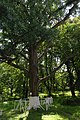 61-220-5006 Zalishyky park SAM 8675.jpg