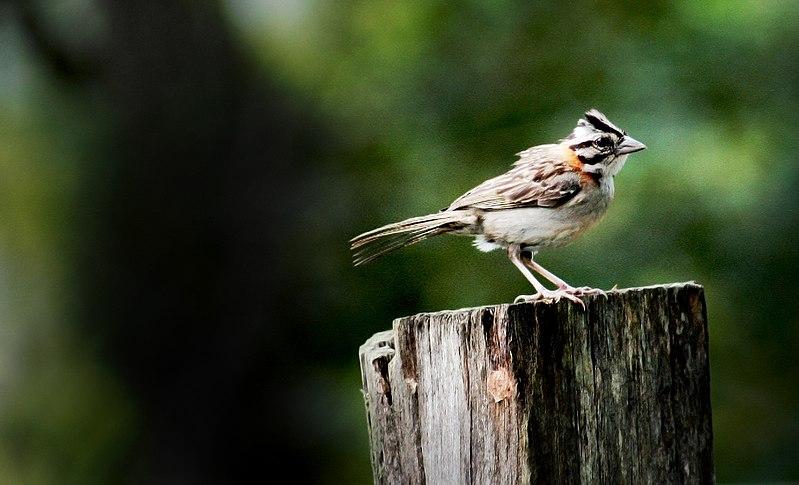 A Bird (2251389324).jpg