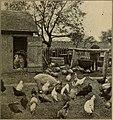 A familiar farm yard scene, c. 1904.jpg