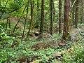 A footbridge in Six Acre Wood. - geograph.org.uk - 1302631.jpg