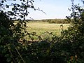 A gap in the hedge - geograph.org.uk - 590653.jpg