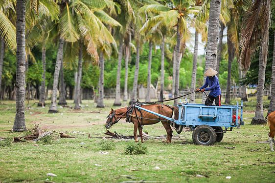 A local farmer working with his animals and cart Wokshots.jpg