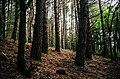 A magic wood.jpg