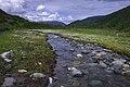 A meadow in Denali (910758d3-46c3-4594-aec4-36e146243bf8).jpg