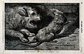 A terrier dog has chased a rat into a corner and is about to Wellcome V0021375.jpg