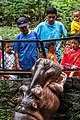 African hippopotamus greeting guests, Gembira Loka Zoo, Yogyakarta, 2015-03-15 02.jpg