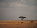 African savannah @ Masai Mara (21743211478).jpg