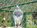Aguila I.JPG
