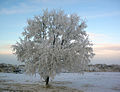 Alkali lake tree.jpg