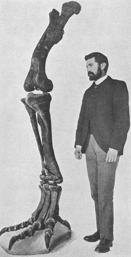 Allosaurus-hind-limb