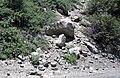 Alpine glacial till (Pleistocene; Lee Vining Canyon, Yosemite National Park, California, USA) 6.jpg