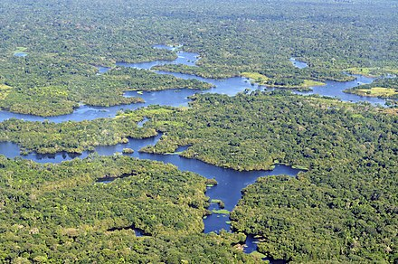 Aerial view of the Amazon Rainforest, near Manaus Amazon CIAT (4).jpg