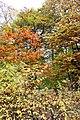 Americká zahrada - Chudenice - Okres Klatovy. (004).jpg