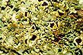 Anaptychia palmulata-9.jpg
