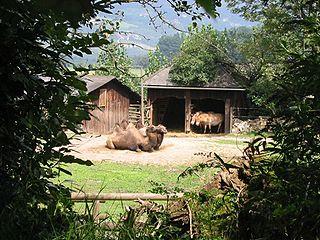 Herberstein Zoo Austrian zoo and nature park