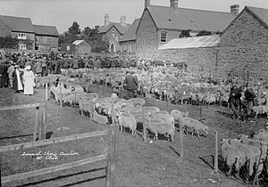 Clun - Annual sheep auction; P B Abery (1877?–1948); 1920s