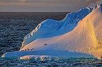 Another spectacular cruise northward along the NW coast of the Antarctic Peninsula. (25386756293).jpg