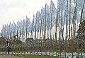 Antoon Versteegde 1000 Flags One Flow 2.jpg