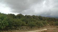 Apple and peach orchards - Dasht tehsil, Balochistan, Pakistan.jpg