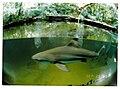 Aquarium Zoologischer Garten Berlin - Wildlife ^ Zoo Photography - panoramio.jpg