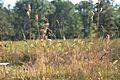 Araignées, insectes et fleurs de la forêt de Moulière (Les Agobis) (28942792111).jpg