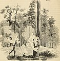 Arboretum et fruticetum britannicum, or - The trees and shrubs of Britain, native and foreign, hardy and half-hardy, pictorially and botanically delineated, and scientifically and popularly described (19743360962).jpg