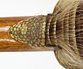 Armadillo backed Bolivian Charango 09.jpg