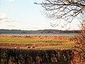 Arnside, Cumbria - panoramio.jpg