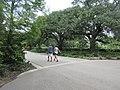 Audubon Park New Orleans St Charles Side 3 July 2020 04.jpg