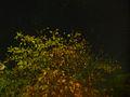 Autumn - 77 (2009). (15903736954).jpg