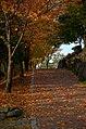 Autumn Road (17365665).jpeg