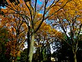 Autumn in Madison - panoramio (4).jpg