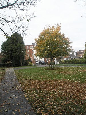 Priory Park, Chichester - Image: Autumn in Priory Park (1) geograph.org.uk 1558861