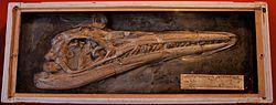 meaning of ichthyosaurus