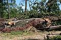Bažantnice (Hodonín) after tornado strike 2021-07-10 1806.jpg