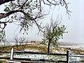 Badlands Tree (20612591853).jpg