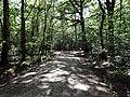 Balade en Forêt de Verrières le 20 août 2017 - 004.jpg